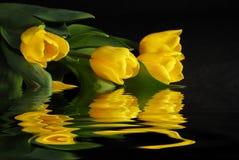 Tulipes sur l'eau Image libre de droits