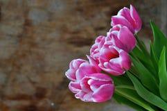 Tulipes sur le backgroung en bois Photo stock