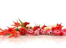 Tulipes sur le blanc Photographie stock libre de droits