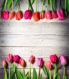 Tulipes sur le bois de vintage photo stock