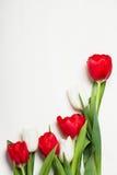 Tulipes sur le fond clair Photos libres de droits