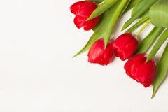 Tulipes sur le fond de ligth Photos libres de droits