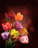 Tulipes sur le fond foncé Image libre de droits