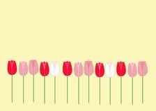 Tulipes sur le jaune Photos stock