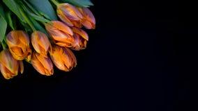 Tulipes sur le noir Photographie stock libre de droits