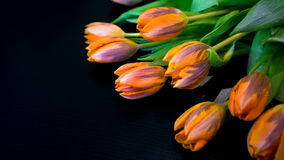 Tulipes sur le noir Photo stock
