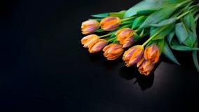 Tulipes sur le noir Photographie stock