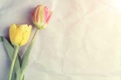 Tulipes sur le vieux papier, fond de texture de vintage Photographie stock