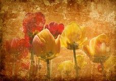 Tulipes sur un fond grunge Images libres de droits