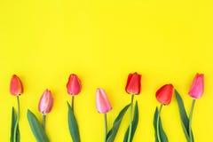 Tulipes sur un fond jaune photo stock