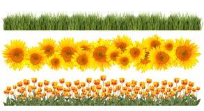 Tulipes, tournesols et cadres d'herbe photos libres de droits