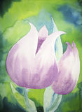 Tulipes violettes Image stock