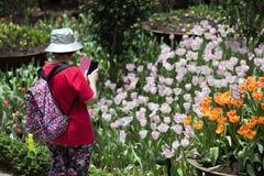 Tulipmania 2015 садов заливом Сингапуром Стоковая Фотография RF
