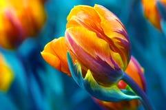 Tulipán azotado por el viento Imágenes de archivo libres de regalías