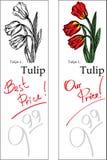 Tulipán - dos precios Fotos de archivo libres de regalías