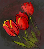 Tulips. Red tulips on dark background Royalty Free Stock Photos