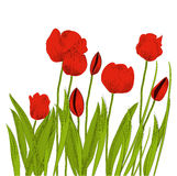 Tulips Royalty Free Stock Images