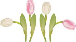 Tulips ilustração royalty free