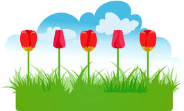Tulips. Background with space for text Royalty Free Stock Photo