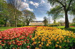 Tulips. A close-up of spring tulips in a park with a castle Royalty Free Stock Photography