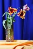 Tulips. Royalty Free Stock Image