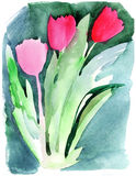 Tulips. Bouquet of tulips. Watercolors painting Stock Images
