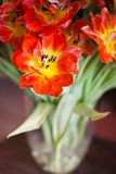 Tulips. Detail of a vase with red and yellow bloomed tulips stock photo