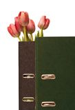 Tulips. In the office file Royalty Free Stock Photography