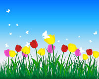 Tulips. Meadow background with tulips. All objects are separated. Vector illustration Stock Photography