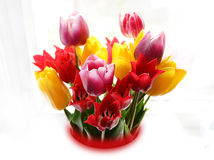 Tulips. Every time I wake up and go to the window, think about tulips Stock Photo