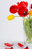 Tulips Foto de Stock