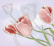 Tulips. Drawn in an artistic way Stock Photo