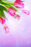 Tulips. Bunch of spring  tulips over magic  starry background with copy space Royalty Free Stock Image