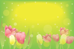 Tulips. Magic background with beautiful tulips Royalty Free Illustration