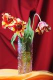 Tulips. Stock Photography