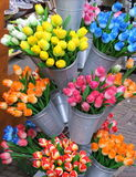 Tulips. Various coloured tulips in metal buckets royalty free stock images