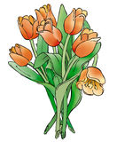 Tulips. A bouquet of tulips isolated on a white background Royalty Free Stock Photography