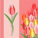 Tulips. Pink tulips on pink yellow background Stock Image