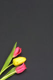 Tulips. Isolated on black royalty free stock photos
