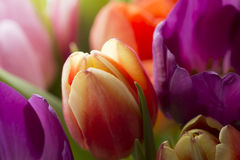 Tulips. A bouquet of colorful tulips Stock Photo