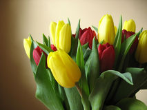 Tulips 3. Tulips in red and yellow with a peach background Stock Photo