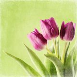 Tulips. Bouquet on green background. spring flowers Royalty Free Stock Images