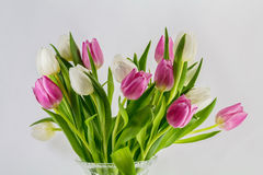 Tulips. A bouquet with spring flowers Stock Photos