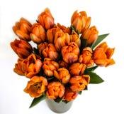 Tulips2 Immagine Stock Libera da Diritti