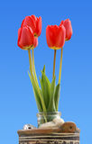 Tulips. Shooting in the countryside Royalty Free Stock Photography
