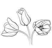 Tulips 01 ilustração do vetor
