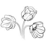 Tulips 02 ilustração stock