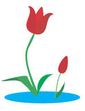 Tulips. Red tulips Royalty Free Stock Images