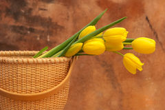 Tulips. Against Warm And Natural Background Royalty Free Stock Photography