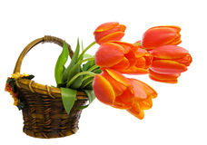 Orange Tulips in Basket Stock Photos